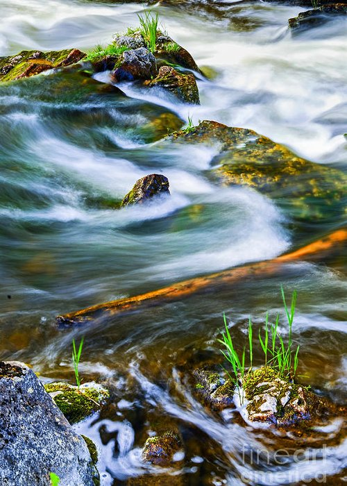River Greeting Card featuring the photograph Intimate With River by Elena Elisseeva