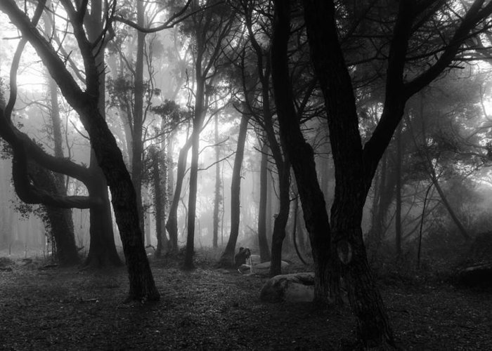 Mystic Greeting Card featuring the photograph Into The Mystic by Marco Oliveira