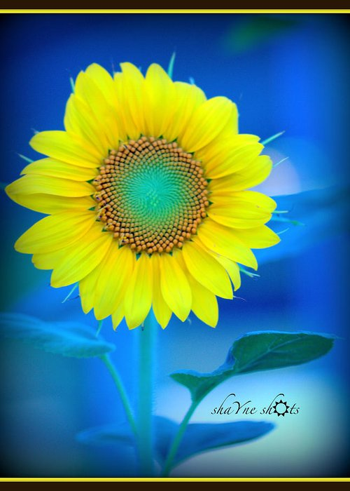 Sunflower Greeting Card featuring the photograph Intricate Design by Shayne Johnson Fleming