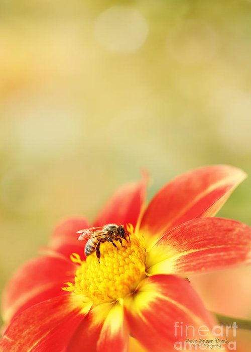Dahlia Greeting Card featuring the photograph Inviting by Beve Brown-Clark Photography