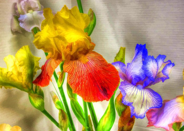 Iris Greeting Card featuring the photograph Iris #18 by John Derby