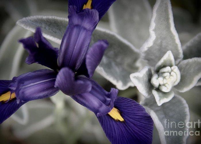 Iris Greeting Card featuring the photograph Iris by A K Dayton