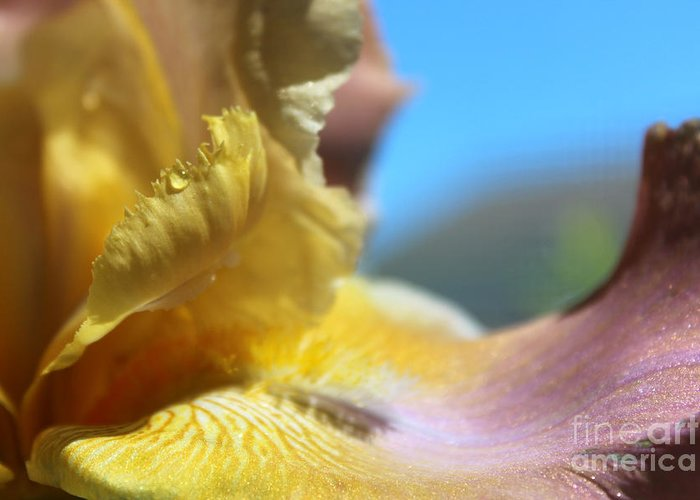 Macro Greeting Card featuring the photograph Iris Landscape by Stacey Zimmerman