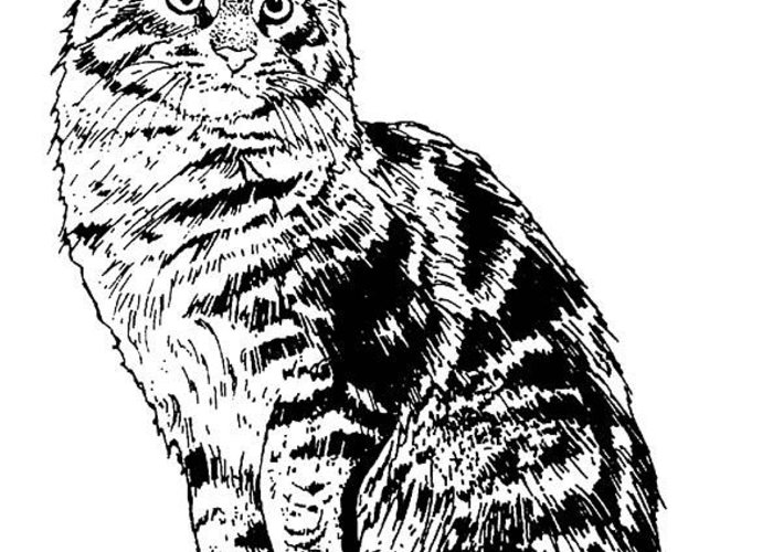 Cat Greeting Card featuring the drawing Is That You? by For The Love Of Art