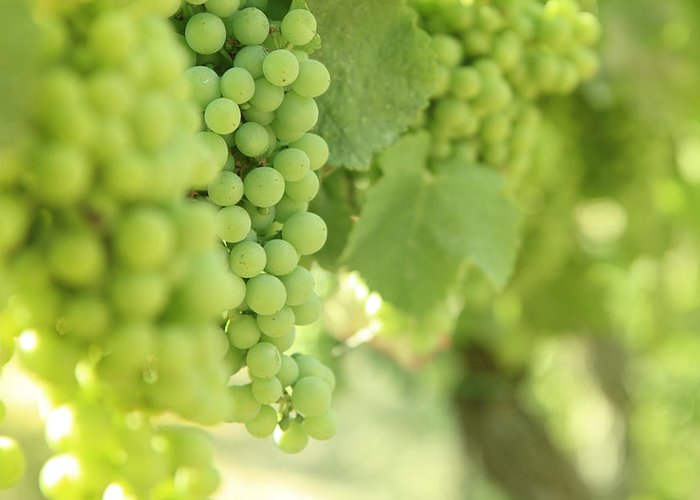 Alcohol Greeting Card featuring the photograph Italian Spumante White Grapes by Tostphoto