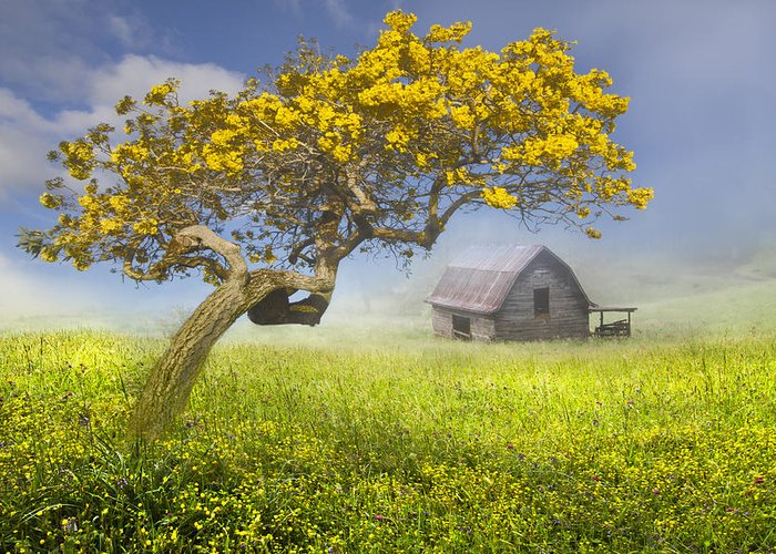 Appalachia Greeting Card featuring the photograph It's A Beautiful Day by Debra and Dave Vanderlaan