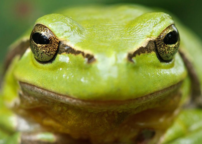 Amphibian Greeting Cards
