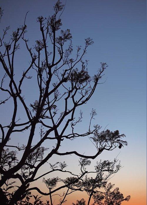 Jacarandas Greeting Card featuring the photograph Jacaranda Sunset by Rona Black