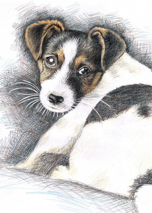 Dog Greeting Card featuring the drawing Jack Russell Puppy by Nicole Zeug