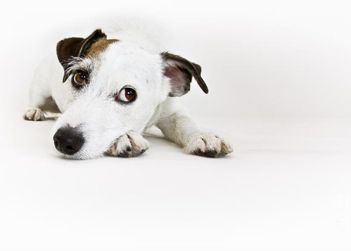 Dog Images Greeting Cards