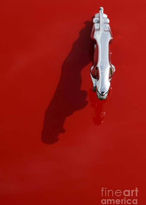 Jaguar Greeting Card featuring the photograph Jaguar Xjs Hood Ornament Abstract by Tim Gainey