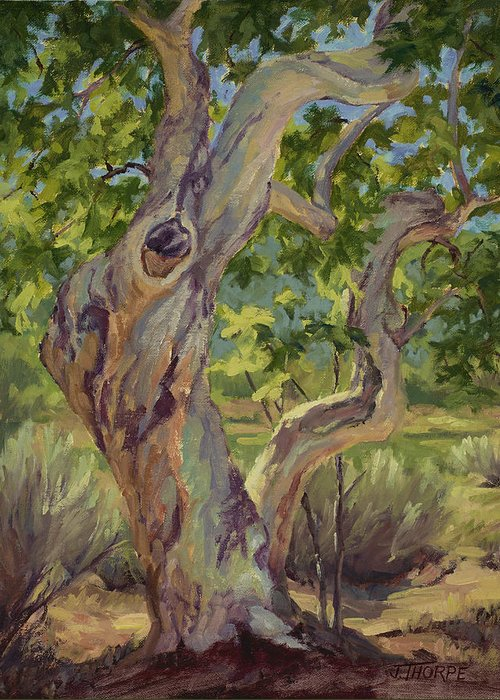 Tree. Sycamore Greeting Cards
