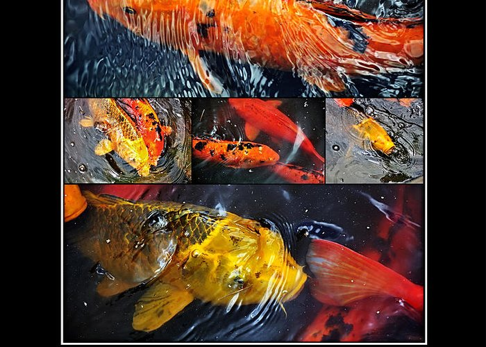 Photography Greeting Card featuring the photograph Japanese Koi by Kaye Menner