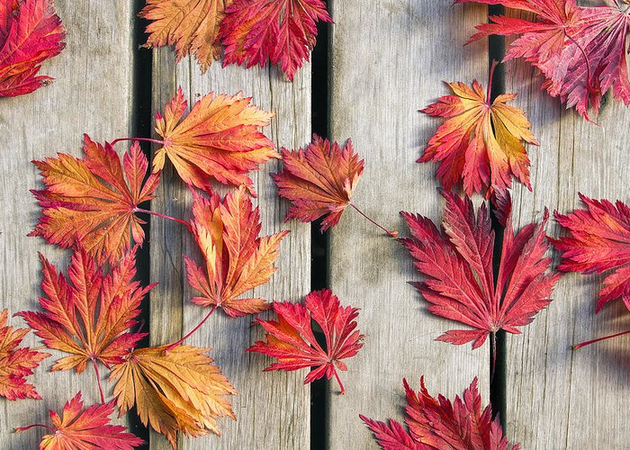 Fallen Leaves Greeting Cards