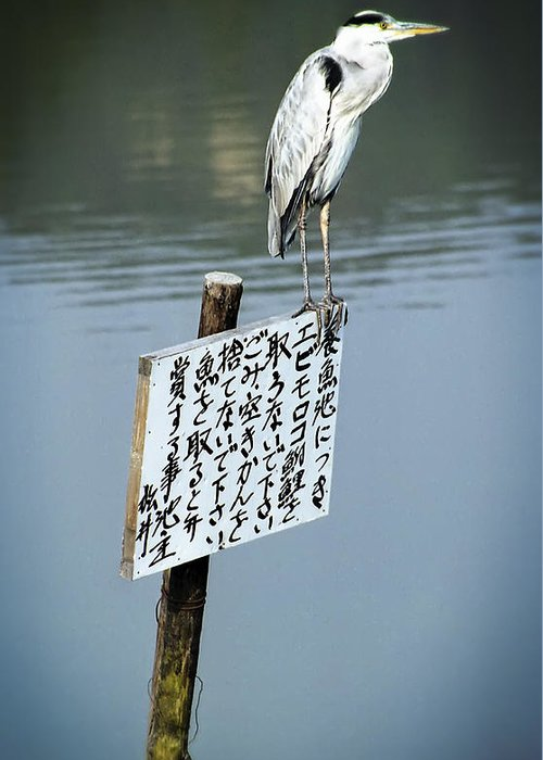 Japan Greeting Card featuring the photograph Japanese Waterfowl - Kyoto Japan by Daniel Hagerman