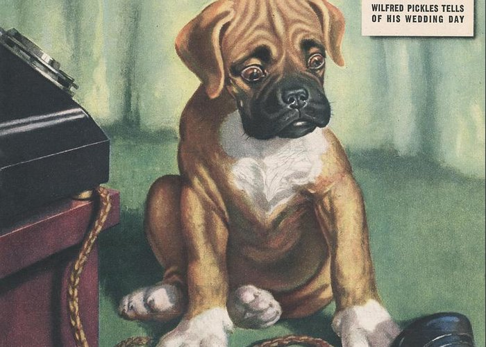 1940�s Greeting Card featuring the drawing John Bull 1949 1940s Uk Dogs Magazines by The Advertising Archives