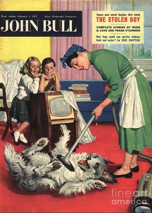 1950�s Greeting Card featuring the drawing John Bull 1957 1950s Uk Dogs Cleaning by The Advertising Archives