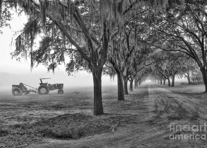 Low Greeting Card featuring the photograph John Deer Tractor And The Avenue Of Oaks by Scott Hansen