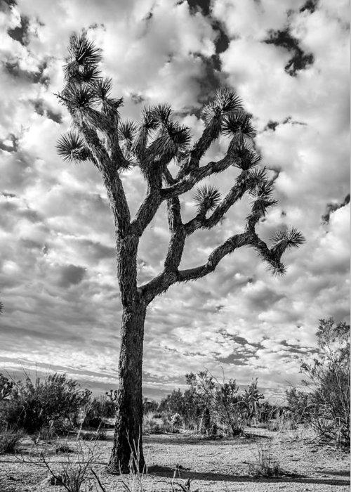 California Greeting Card featuring the photograph Joshua Tree by Radek Hofman