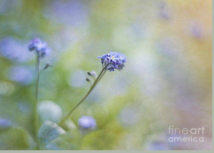Forgetmenot Greeting Card featuring the photograph Joyful Awakening by Maria Ismanah Schulze-Vorberg