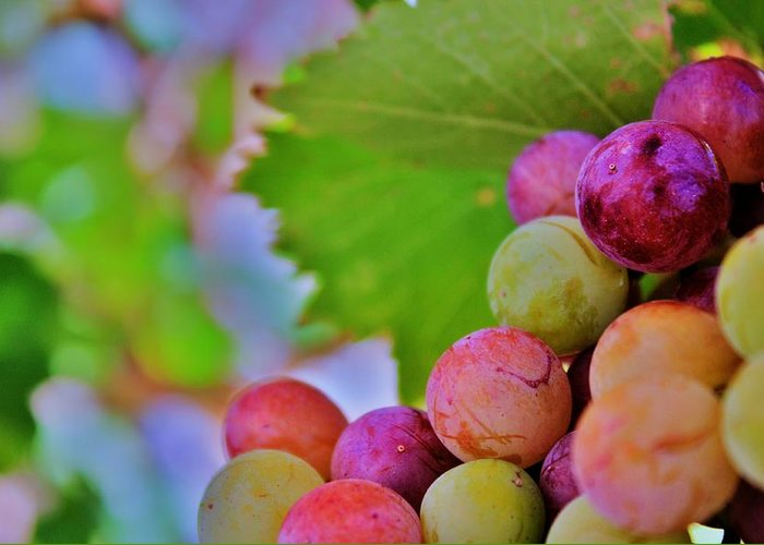 Wine Greeting Card featuring the photograph Juicy by Ericka Adabashi