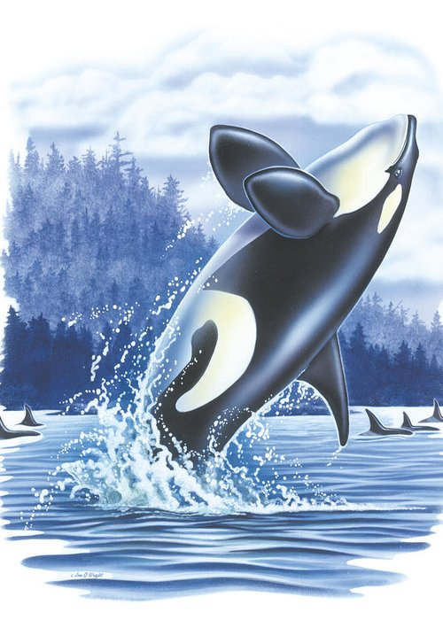 Jon Q Wright Greeting Card featuring the painting Jumping Orca by JQ Licensing