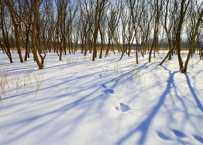 Winter Greeting Card featuring the photograph Jumping Shadows by Ben Thompson