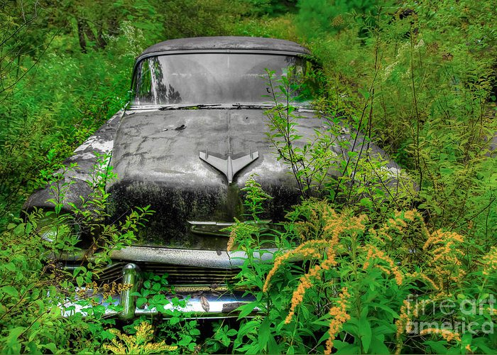 Cars Greeting Card featuring the photograph Jungle Fever Vintage Chevy by Brenda Giasson