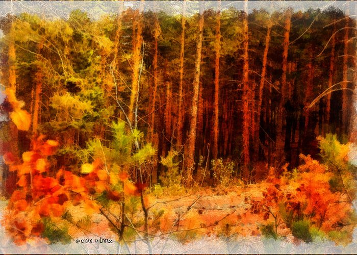 Tree Greeting Card featuring the photograph Jungle by Okan YILMAZ