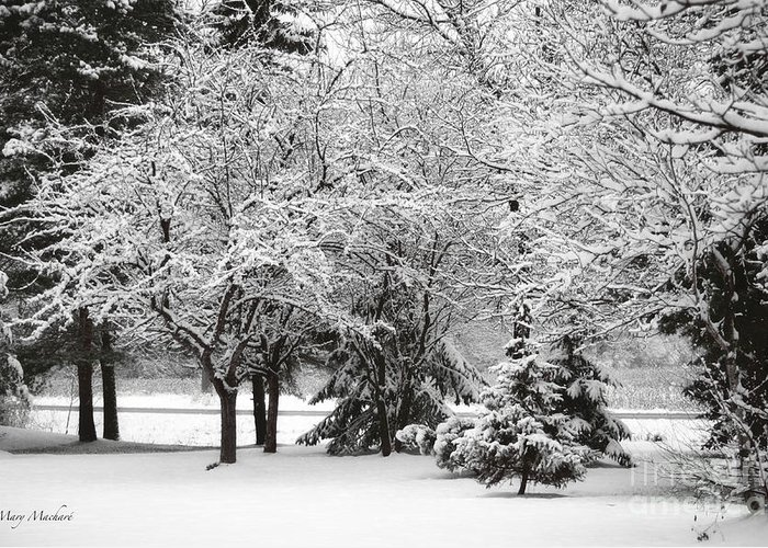 Just After A Snowfall Greeting Card featuring the photograph Just After A Snowfall by Mary Machare