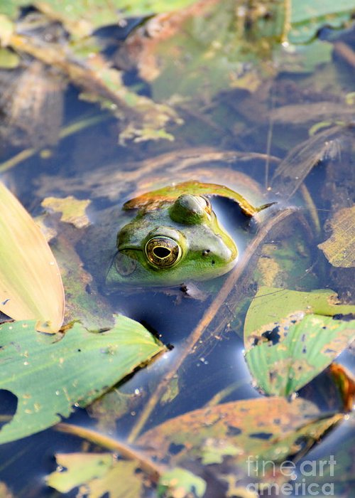 Frog Greeting Card featuring the photograph Just Hanging Around by Rick Rauzi