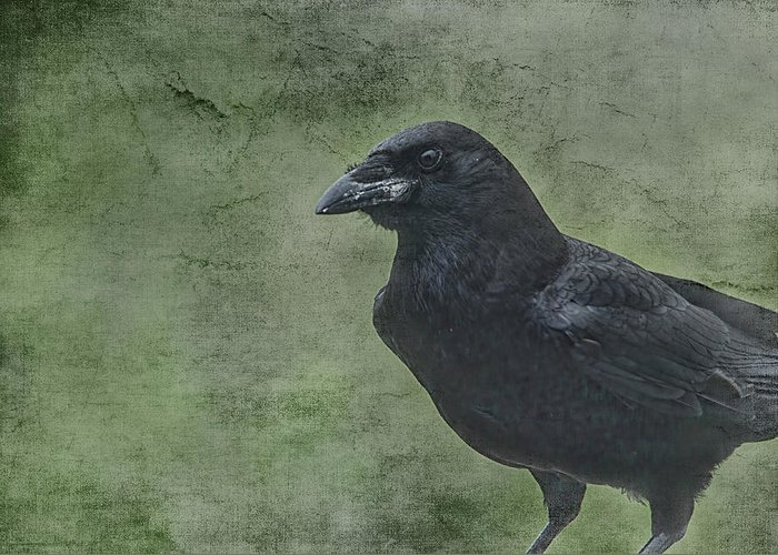 Raven Greeting Card featuring the photograph Just Passing Through by Susan Capuano