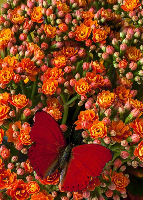 Kalanchoe Plant Greeting Card featuring the photograph Kalanchoe Plant With Butterfly by Garry Gay