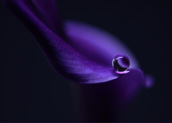 Purple Greeting Card featuring the photograph Kala`s Pearl Ll by Heidi Westum