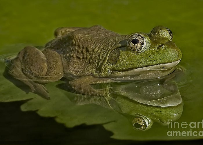 Frog Greeting Card featuring the photograph Kermit by Susan Candelario