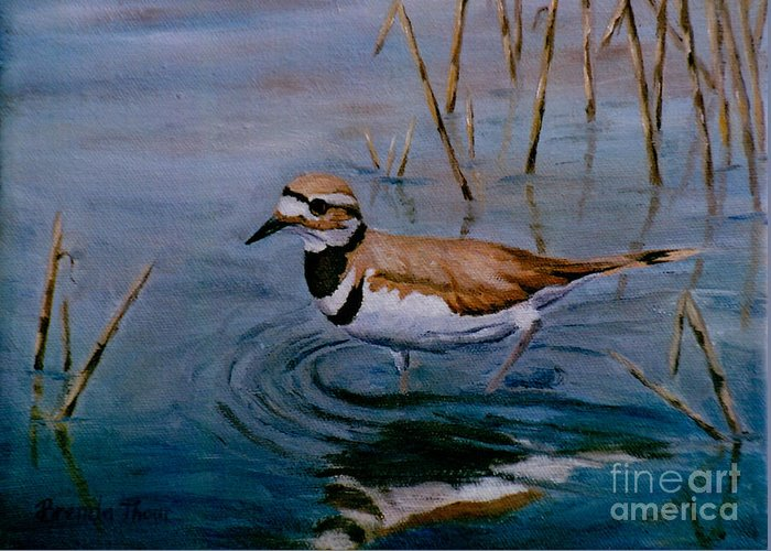 Bird Greeting Card featuring the painting Killdeer by Brenda Thour