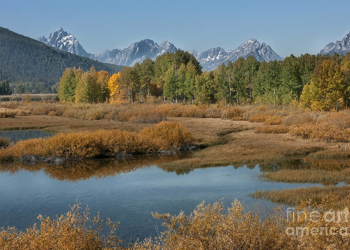 Grand Teton Greeting Card featuring the photograph Kiss Of Fall In The Grand Tetons by Sandra Bronstein