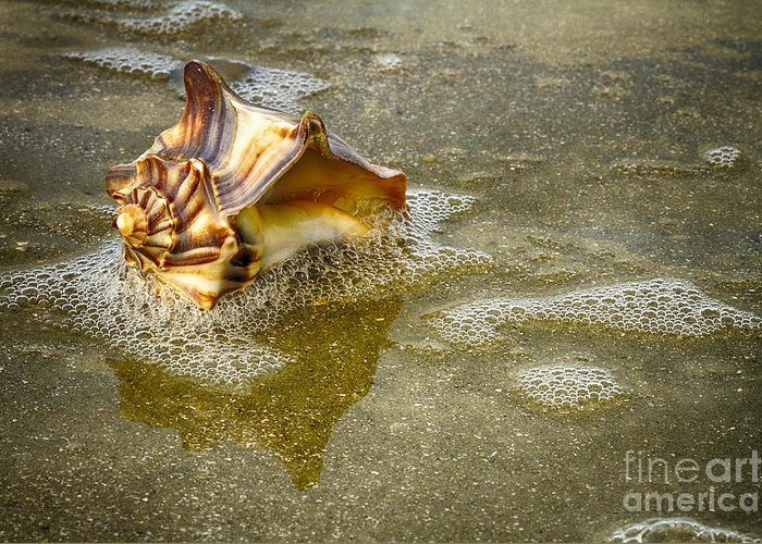 Shells Greeting Card featuring the photograph Knobbed Whelk 10 Botany Bay by Carrie Cranwill
