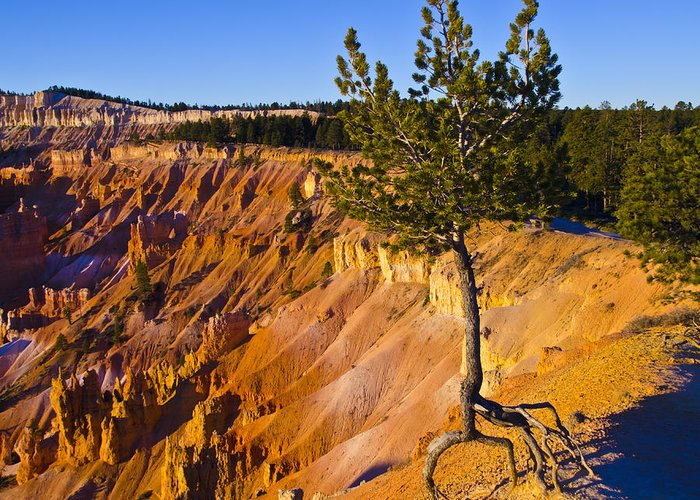Bryce Canyon National Park Greeting Card featuring the photograph Know Your Roots - Bryce Canyon by Jon Berghoff