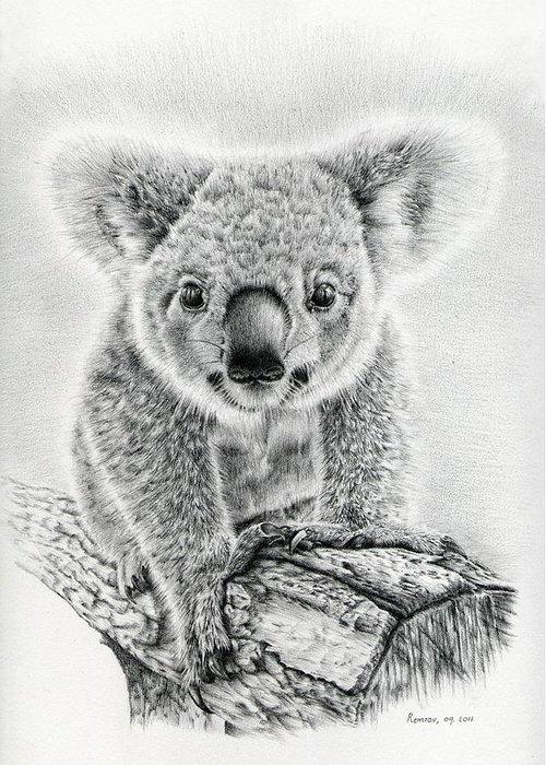 Koala Drawings Greeting Cards