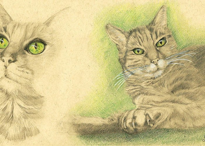 Cat Greeting Card featuring the drawing Kobi Study by Marcianna Howard