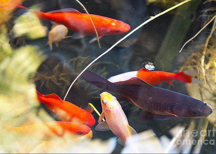 Koi Greeting Card featuring the photograph Koi Pond The Symbol Of Love And Friendship by Artist and Photographer Laura Wrede