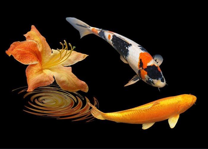 Japanes Koi Fish Greeting Card featuring the photograph Koi With Azalea Ripples by Gill Billington