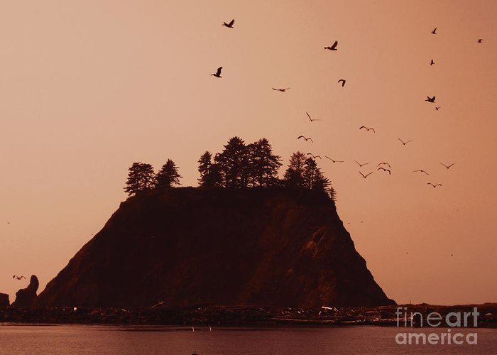 La Push Greeting Card featuring the photograph La Push Silhouette With Birds by Kym Backland