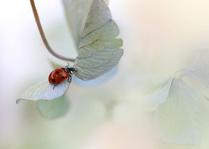 Ladybird Greeting Card featuring the photograph Ladybird On Blue-green Hydrangea by Ellen Van Deelen