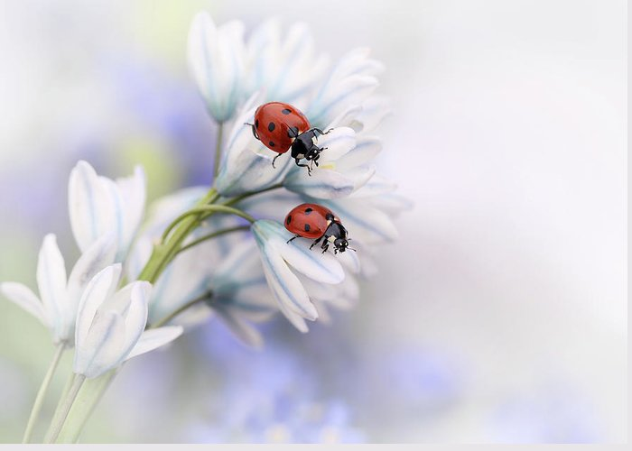 Ladybird Greeting Cards