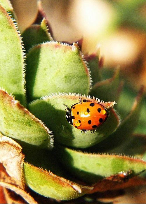 Coccinellidae Greeting Card featuring the photograph Ladybug And Chick by Chris Berry