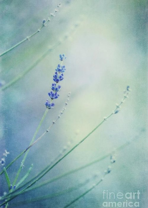 Lavender Greeting Card featuring the photograph Laggard by Priska Wettstein