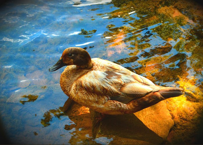 Lake Ducks Greeting Card featuring the photograph Lake Duck Vignette by Stacie Siemsen