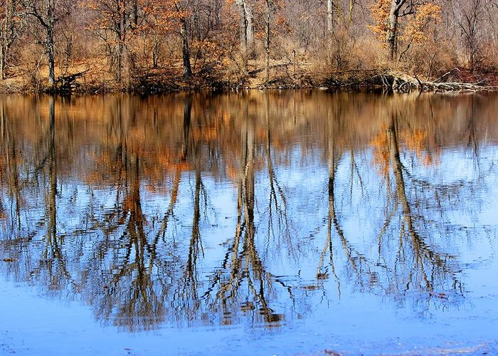 Trees Greeting Card featuring the photograph Lake Reflections by Kimberly Davidson